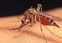 zanzara-killer-due-casi-provincia-milano
